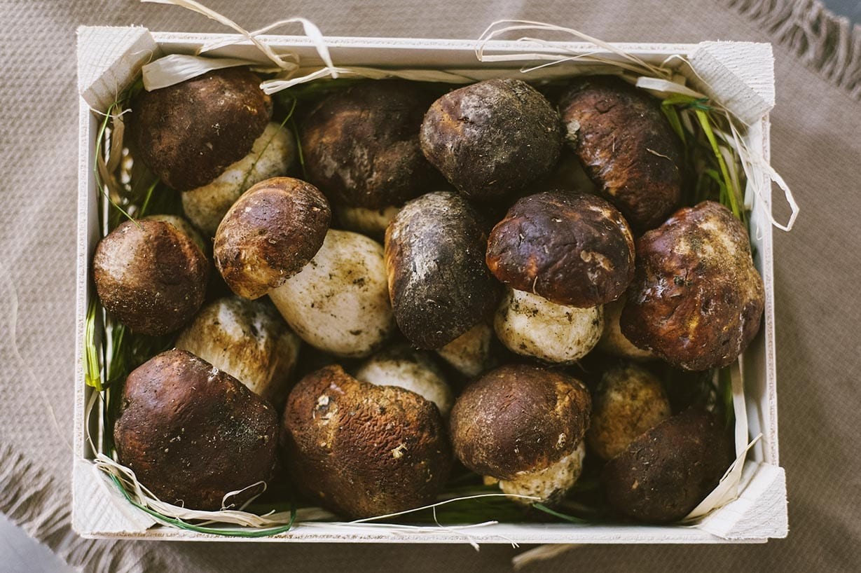 Varietà di funghi, porcini nella foto in una bella cassetta
