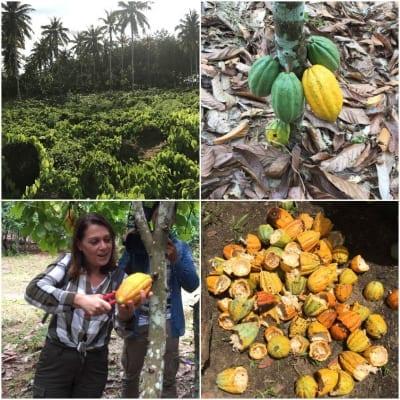 Alla scoperta del cacao: il mio viaggio in Costa d'Avorio